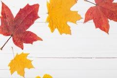 Herbstlaub auf weißem hölzernem Hintergrund Stockfotografie