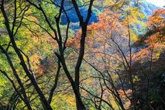 Herbstlaub bei Minoo Park stockfotos