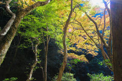 Herbstlaub bei Minoo Park stockfotografie