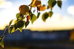 Herbstlaub bei Sonnenuntergang auf dem Hintergrund der Stadt Herbststimmung, Fallschwingungen, Herbstbäume im Sonnenlicht, Fall,  stockbild