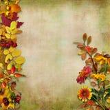 Herbstlaub, Blumen und Beeren auf einem Weinlesehintergrund Stockbilder