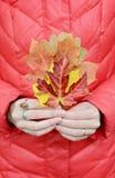 Herbstlaub in den Händen Stockfoto