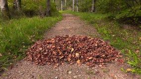 Herbstlaub, der auf den Blattstapel fällt stock footage
