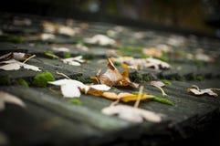 Herbstlaub, der auf der Holzbrücke mit grünem Moos liegt lizenzfreies stockbild