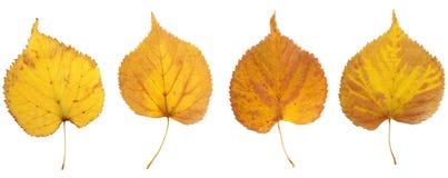 Herbstlaub der Birke in der gelben, braunen und roten Farbe Lizenzfreie Stockfotos