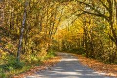 Herbstlaub, der die Straße entlang Bäcker Lake, in Norh-Kaskaden einfaßt lizenzfreie stockfotos