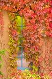 Herbstlaub, der ein New Mexiko-Fenster schmückt Lizenzfreie Stockfotos