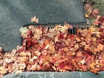 Herbstlaub, der einen Abfluss blockiert Lizenzfreie Stockbilder