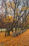 Herbstlaub in einem Park im November stockfoto