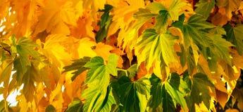 Herbstlaub an einem sonnigen warmen Tag Stockbilder