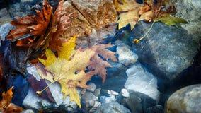 Herbstlaub in einem Strom Stockfotos