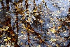 Herbstlaub in einer Pfütze Lizenzfreies Stockfoto