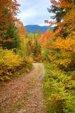 Herbstlaub entlang altem Schotterweg in Carrabasset-Tal, Maine lizenzfreie stockfotos
