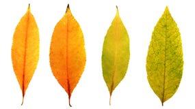 Herbstlaub färbt sich gelb, rotes und orange vier Stücke Stockfoto