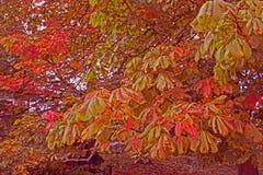 Herbstlaub-Farbhintergrund Lizenzfreies Stockbild