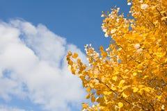 Herbstlaub gegen den blauen Himmel Stockfotografie