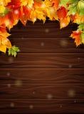 Herbstlaub gegen die dunklen hölzernen Bretter, Ahorndekorationsdesign Auch im corel abgehobenen Betrag Lizenzfreie Stockfotografie