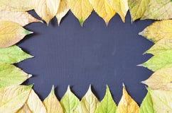 Herbstlaub gestaltet auf einem schwarzen Hintergrund stockfoto