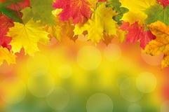Herbstlaub gestaltet über heller unscharfer Natur für Ihren Text Stockfoto