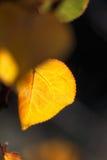 Herbstlaub-goldenes Blatt stockbilder