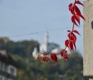 Herbstlaub am Haus stockfoto