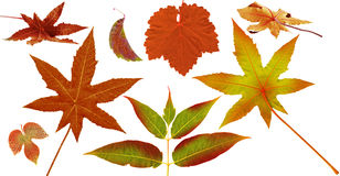 Herbstlaub, Herbstfarben Stockbild