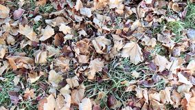 Herbstlaub im Frost stock footage