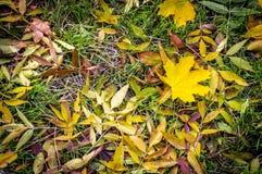 Herbstlaub im Gras stockbilder