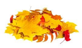 Herbstlaub im Haufen Lizenzfreie Stockbilder