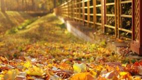 Herbstlaub im Park stockfotos