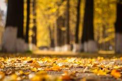Herbstlaub im Park Stockbild