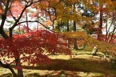 Herbstlaub im Tempel Stockfoto