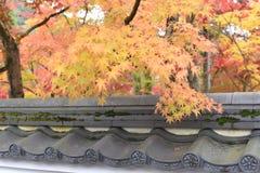 Herbstlaub im Tempel Stockbilder