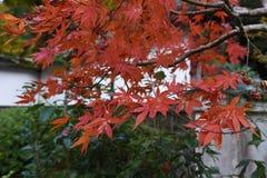 Herbstlaub im Tempel Lizenzfreie Stockbilder