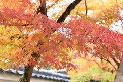 Herbstlaub im Tempel Stockbild
