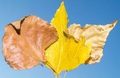 Herbstlaub im Vordergrund Lizenzfreies Stockfoto
