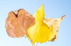 Herbstlaub im Vordergrund stockfotos