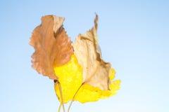 Herbstlaub im Vordergrund stockfotografie