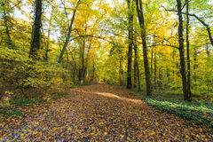 Herbstlaub im Wald Lizenzfreie Stockfotografie