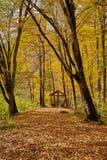 Herbstlaub im Wald Lizenzfreie Stockfotos