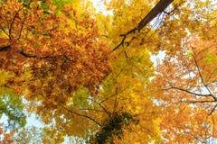 Herbstlaub im Wald Lizenzfreies Stockfoto