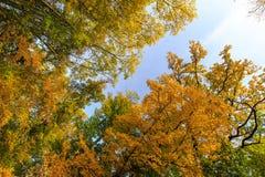 Herbstlaub im Wald Lizenzfreies Stockbild