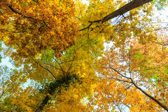 Herbstlaub im Wald Lizenzfreie Stockbilder