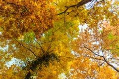 Herbstlaub im Wald Stockfotografie
