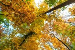 Herbstlaub im Wald Stockfoto