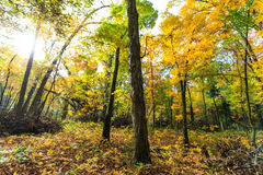 Herbstlaub im Wald Stockbilder