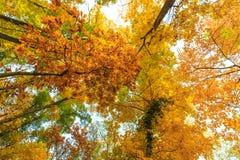 Herbstlaub im Wald Stockbild