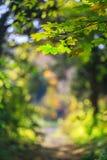 Herbstlaub im Wald Stockfotos