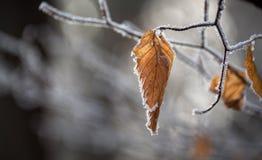 Herbstlaub im Winterwald lizenzfreie stockfotografie