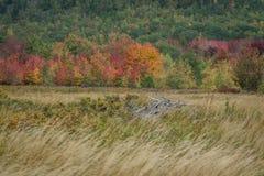 Herbstlaub jesops Spur Stockbilder